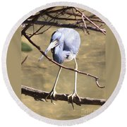 Heron On Branch Round Beach Towel