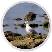 Herring Gull At Charmouth Round Beach Towel