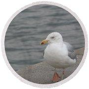 Herring Gull In Copenhagen Round Beach Towel