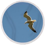 Herring Gull In Flight Round Beach Towel