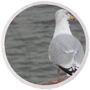 Herring Gull Observing Round Beach Towel