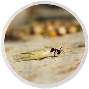 Hey Ant Dragging An Oat Seed Round Beach Towel