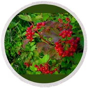 Hi Bush Cranberry Close Up Round Beach Towel