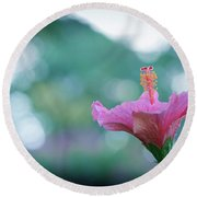 Hibiscus Flower In A Garden Round Beach Towel