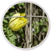 Hidden Yellow Tulip 02 Round Beach Towel