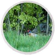 Hiding In The Grass. Pheasant Round Beach Towel