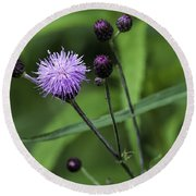 Hill's Thistle Flower And Buds Round Beach Towel