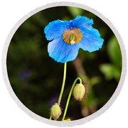 Himalayan Blue Poppy Round Beach Towel