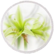 Hippeastrum  Evergreen Round Beach Towel