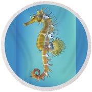 Hippocampus  Round Beach Towel