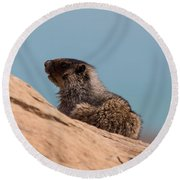 Hoary Marmot On Blue Round Beach Towel