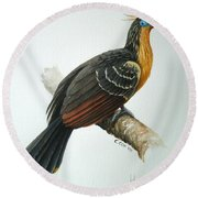 Hoatzin Round Beach Towel