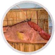 Hog Fish 02 Round Beach Towel