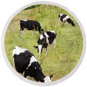 Holstein Cattle Round Beach Towel