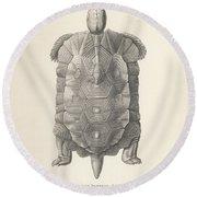 Home's Hingeback Tortoise, Kinixys Homeana Round Beach Towel by Heinrich Grape