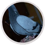 Homing Pigeon Round Beach Towel
