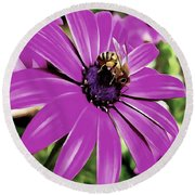 Honey Bee On A Spring Flower Round Beach Towel