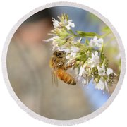 Honey Bee On Herb Flowers Round Beach Towel