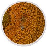 Honey Bee On Sunflower Round Beach Towel