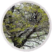 Honey Locust Tree On A Spring Snow Day Round Beach Towel