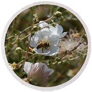 Honeybee Gathering From A White Flower Round Beach Towel