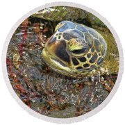 Honu In The Water Round Beach Towel