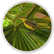 Hooded Oriole H01 Round Beach Towel