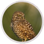 Hoot A Burrowing Owl Portrait Round Beach Towel