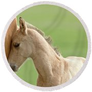 Horse And Colt Round Beach Towel
