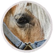Horse Close Up Round Beach Towel