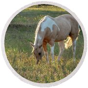 Horse Feeding In Grass Farm With Sunset Light From The Left Round Beach Towel