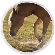 Horse Pawing In Pasture Round Beach Towel by Steve Gadomski