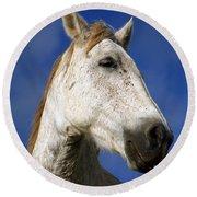 Horse Portrait Round Beach Towel by Gaspar Avila