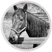 Horse Portrait In Black And White Round Beach Towel