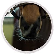 Horse Whiskers Round Beach Towel