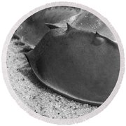 Horseshoe Crab Round Beach Towel