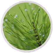 Horsetail With Dew Round Beach Towel