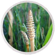 Horsetails And Dew Drops Round Beach Towel