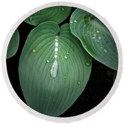 Hostas After The Rain Round Beach Towel