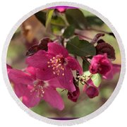 Hot Pink Blossoms Round Beach Towel