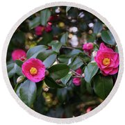 Hot Pink Camellias Glowing In The Shade Round Beach Towel