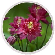 Hot Pink Columbine Round Beach Towel