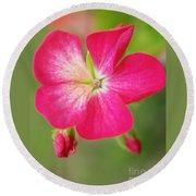 Hot Pink Geranium On A Brilliant Summer Day Round Beach Towel