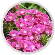 Hot Pink Sweet William Flowers In A Garden Blooming Round Beach Towel