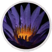 Hot Purple Water Lily Round Beach Towel