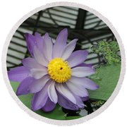 Hothouse Waterlily Round Beach Towel