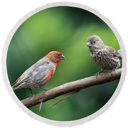 House Finch Courtship Round Beach Towel