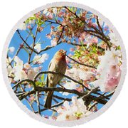 House Finch In The Cherry Blossoms Round Beach Towel