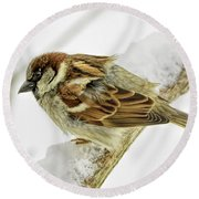 House Sparrow Round Beach Towel