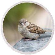 House Sparrow Round Beach Towel by Scott Lyons